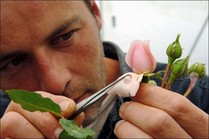 Apprendre à tailler des rosiers