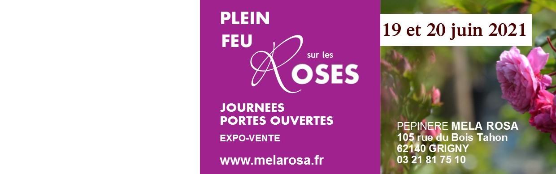 Juin des Roses chez Mela Rosa